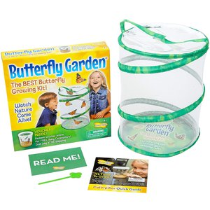 Butterfly Growing Kit Toy