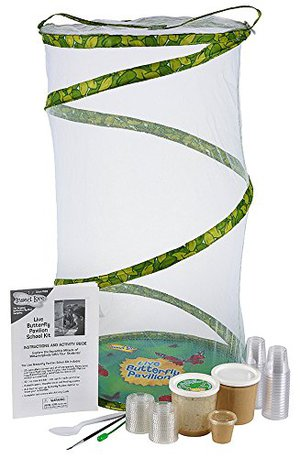 Insect Lore Classroom Butterfly School Kit